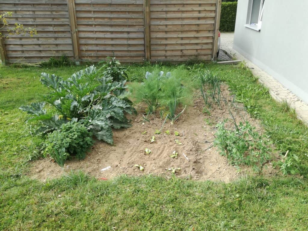 Our garden starting to look good