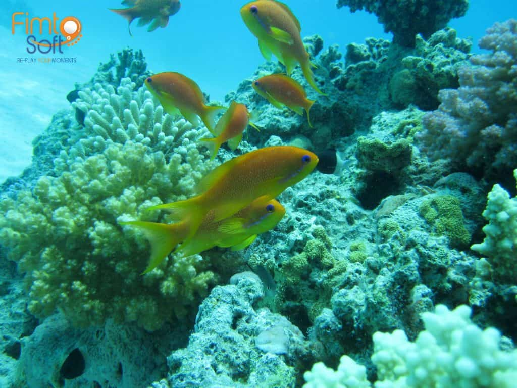 Fish seen from snorkeling