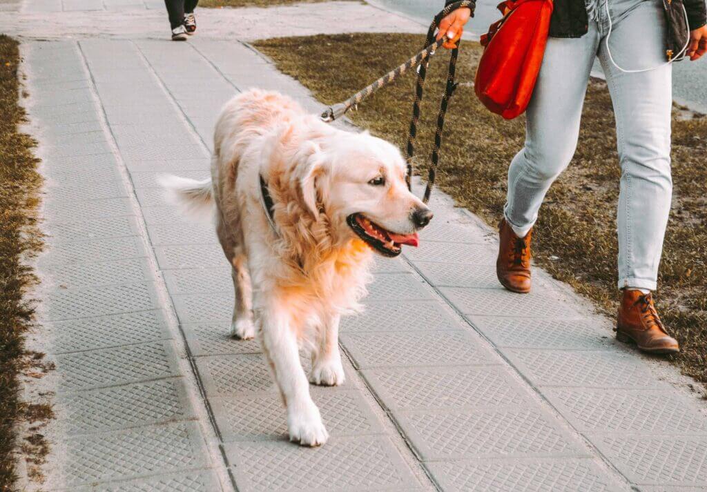 Dog walking as a side hustle